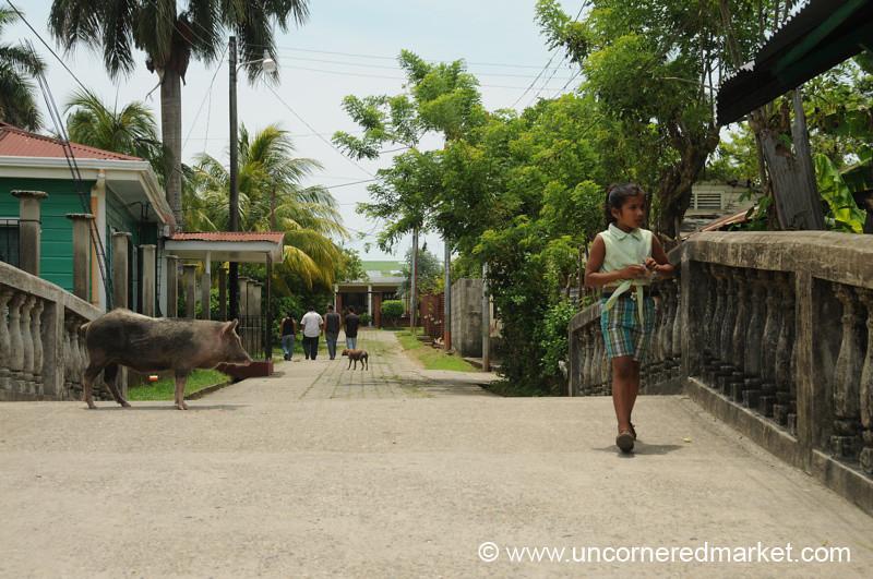 Pig and Girl on Bridge - Livingston, Guatemala