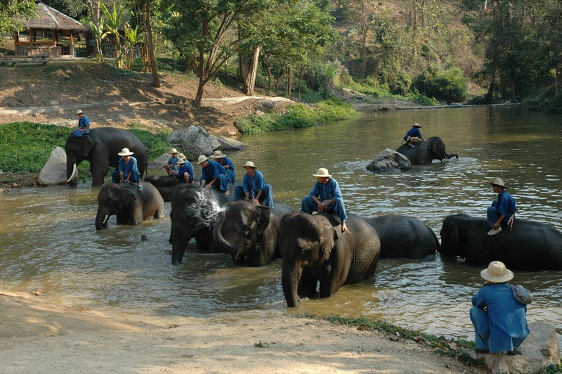 Elephants in the River  - Lampang, Thailand