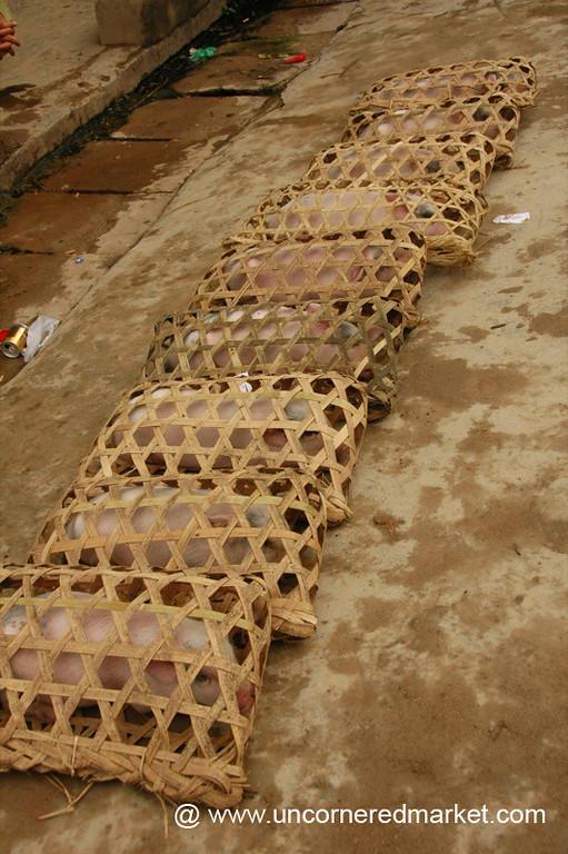 Pigs in Baskets, Menghun Market - Xishuangbanna, China