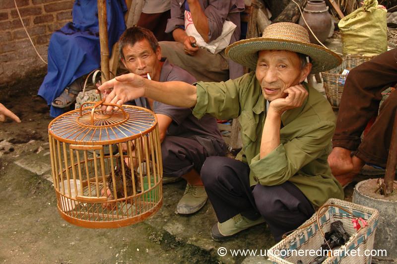 Bird for Sale - Guizhou Province, China