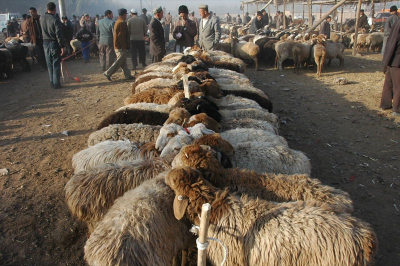 Kashgar Animal Market: Sheep - China
