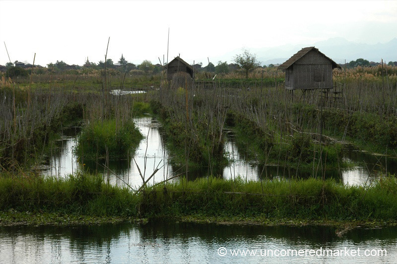 Floating Gardens at Inle Lake, Burma