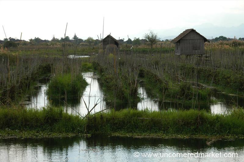 Floating Gardens at Inle Lake, Burma