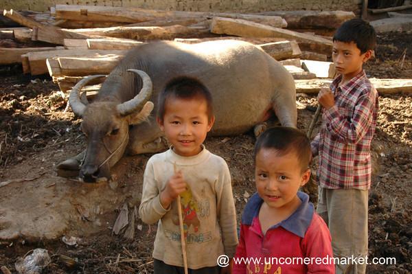 Boys with Water Buffalo - Yuanyang, China