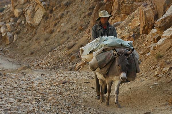 Donkey with Heavy Load - Garm Chashma, Tajikistan