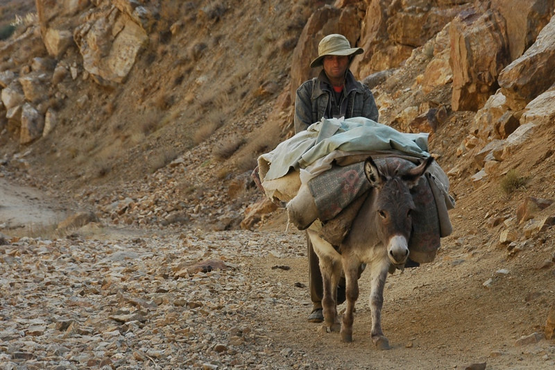 Donkey with Heavy Load - Garm Chashma, Tajikistan