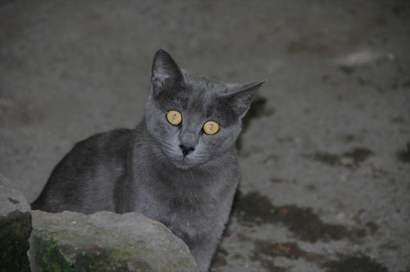 Scary Cat - Tbilisi, Georgia