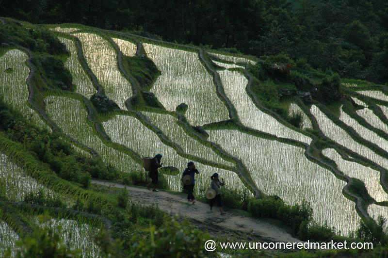 Rice Fields - Yuanyang, China
