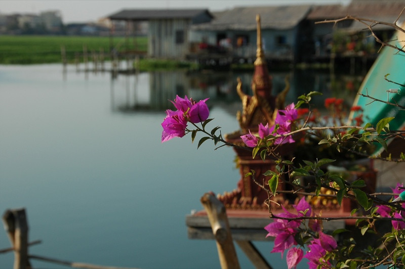 Flowers and the Boeng Kak Lake - Phnom Penh, Cambodia
