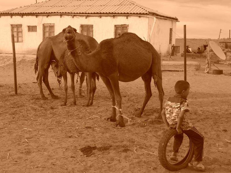 Boy Watching Camels - Jerbent, Turkmenistan