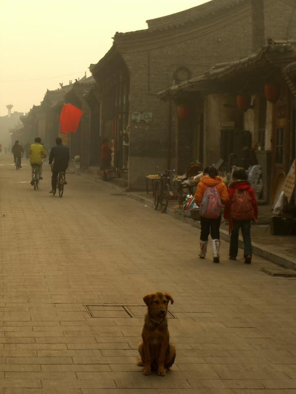 Guard Dog in Pingyao - Pingyao, China