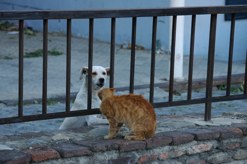 A Cat and a Dog - Tbilisi, Georgia