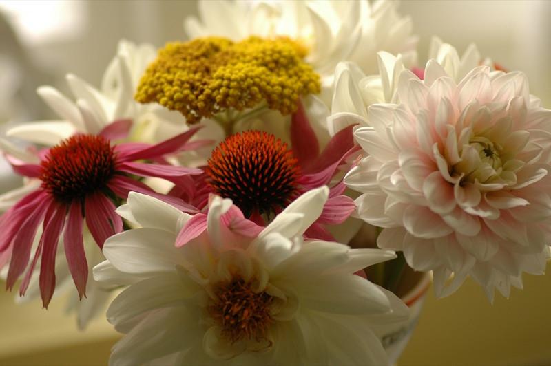 Flower Arrangement - Bohemia, Czech Republic