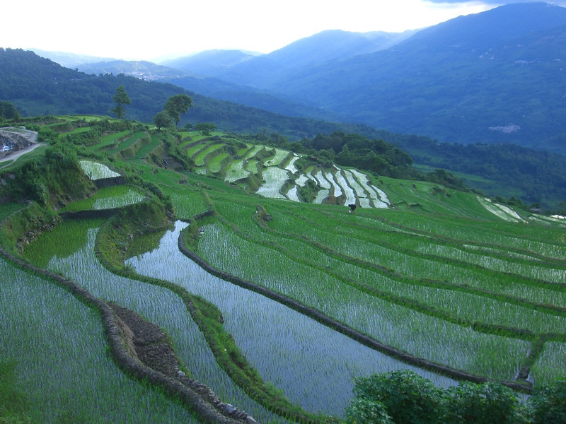 Yuanyang Terraced Rice Fields - Yunnan, China
