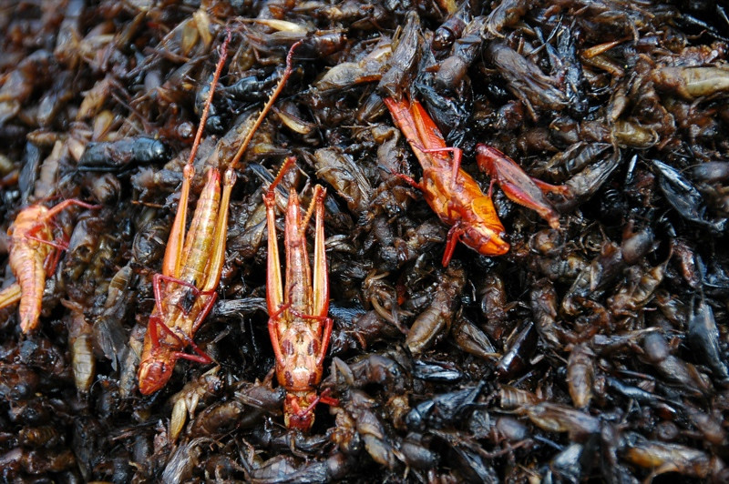Crickets and Bugs for Snacks - Siem Reap, Cambodia