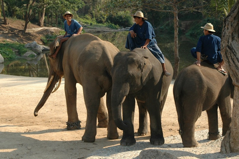 Men on Elephants - Lampang, Thailand