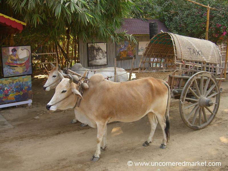 Burmese Oxen Taxi - Mingun, Burma
