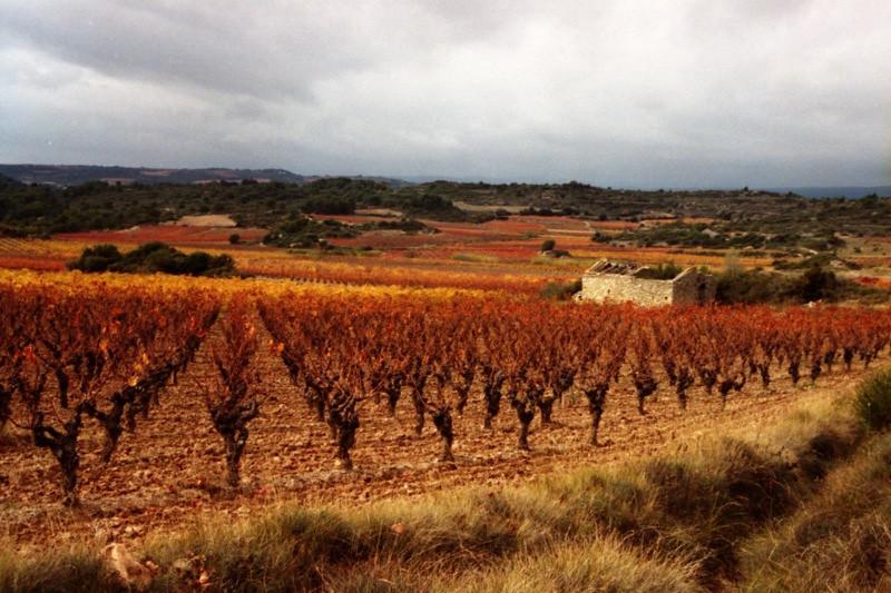 Autumn Vineyards – Languedoc, France