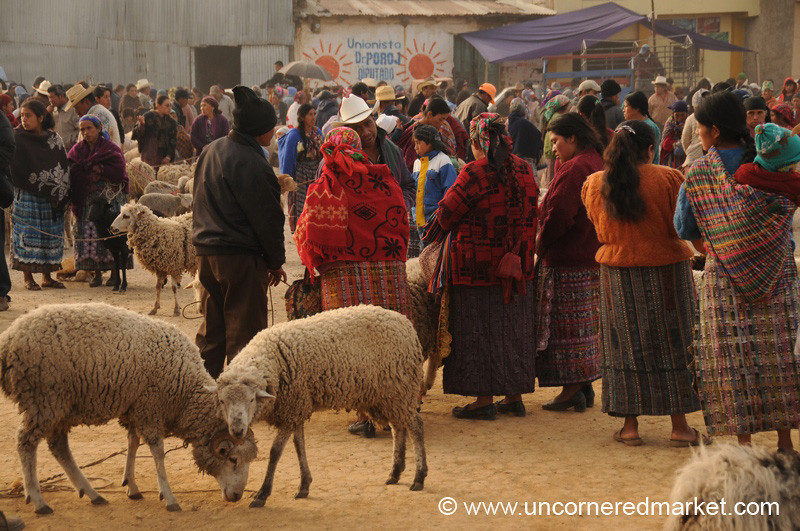 San Francisco El Alto Animal Market, Sheep and Owners - Guatemala