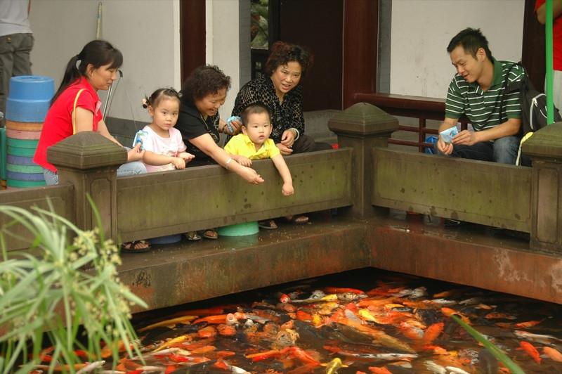 Feeding Fish at People's Park - Chengdu, China