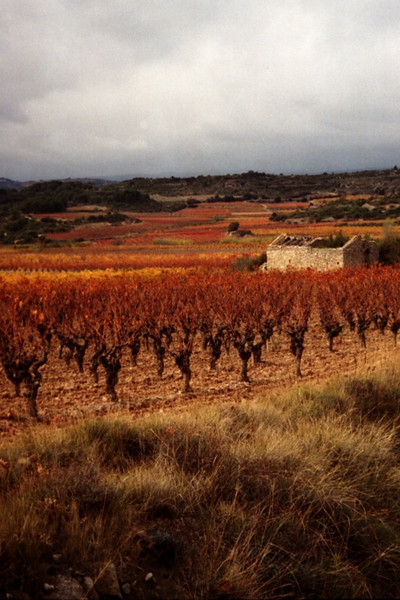Vineyards in Languedoc, France