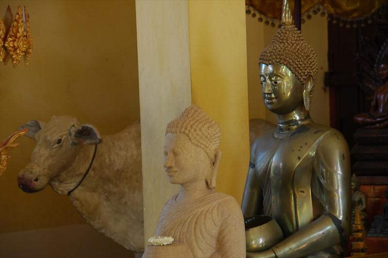 Buddhas and Cow - Phnom Penh, Cambodia