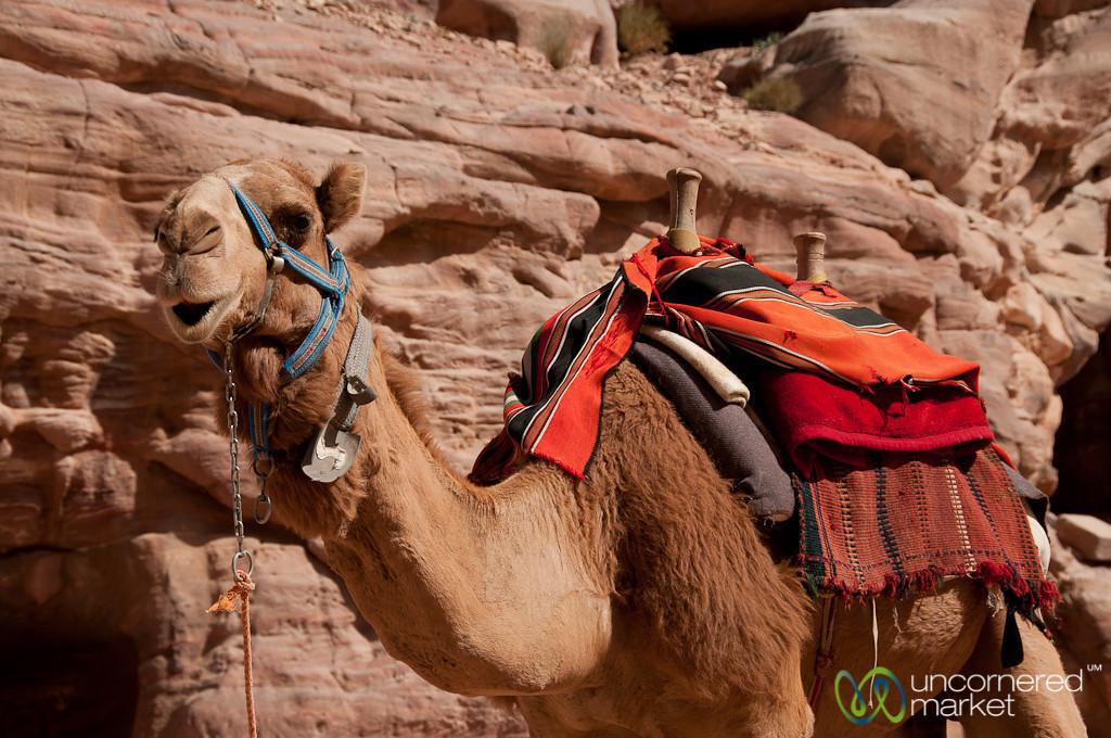 Camel Ride Anyone? Petra, Jordan