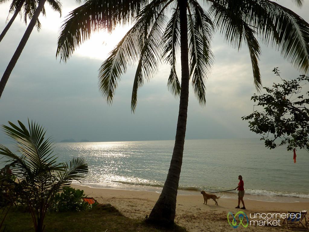 Dogsitting on Koh Samui - Thailand