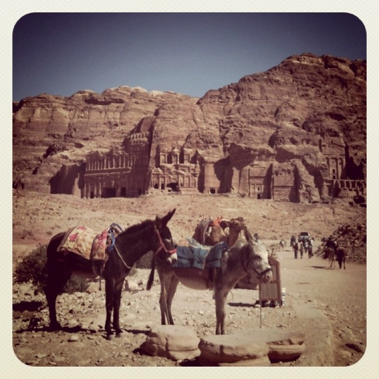 Camels and Royal Tombs - Petra, Jordan