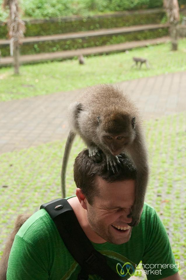 Monkey Found Your Nose - Ubud, Bali