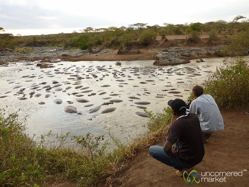 Admiring the Hippo Pool - Serengeti, Tanzania