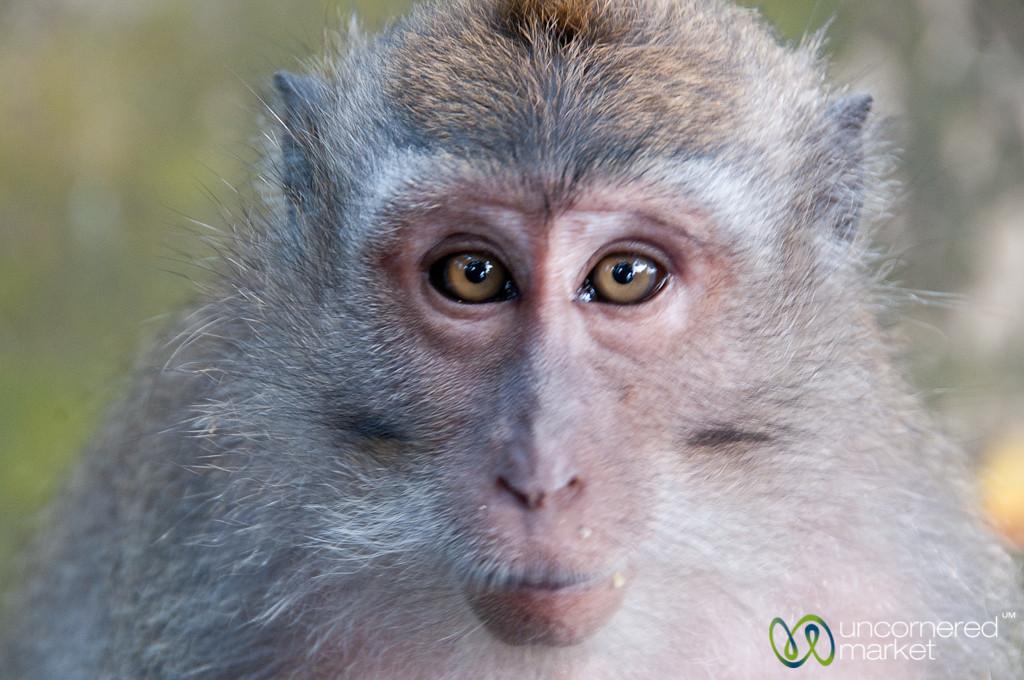 Monkey with Food Crumbs - Ubud, Bali