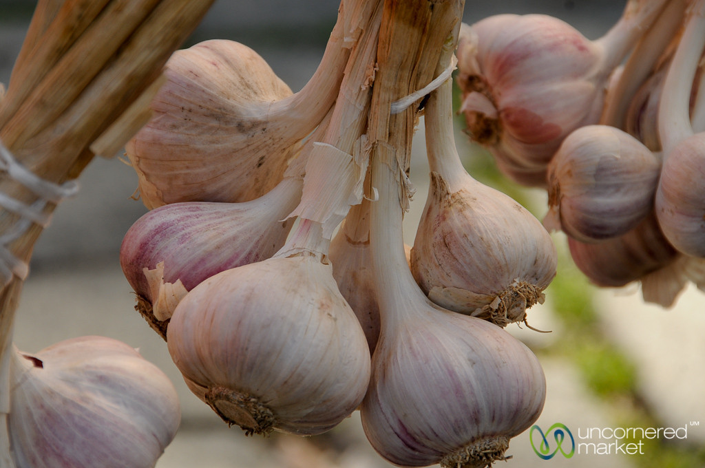 Up Close with Fresh Garlic - Prague, Czech Republic