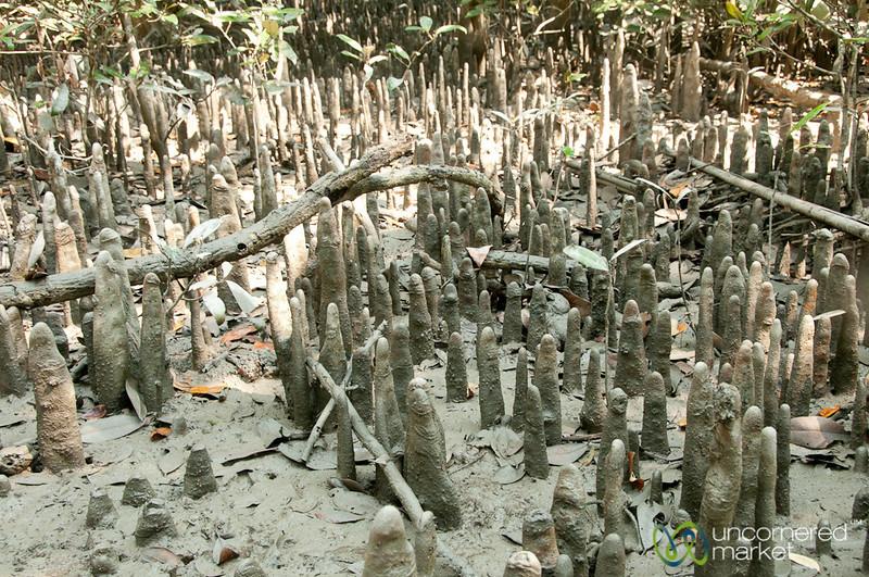 Mangrove Roots - Sundarbans, Bangladesh