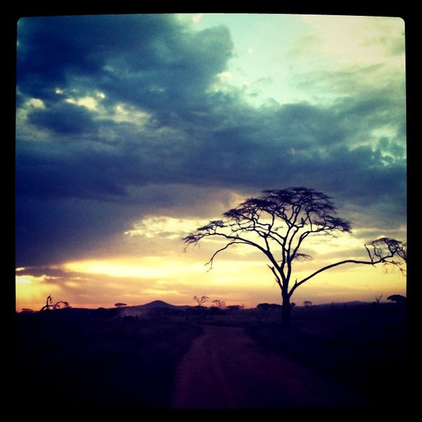 Sunset in the Serengeti - Tanzania