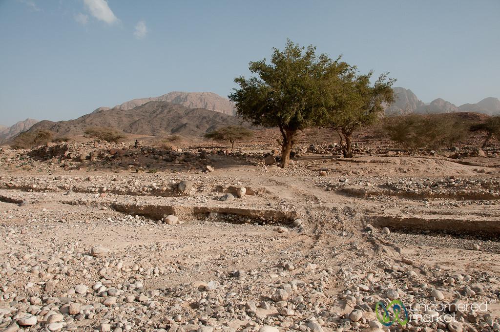What Used to be a Road - Feynan, Jordan