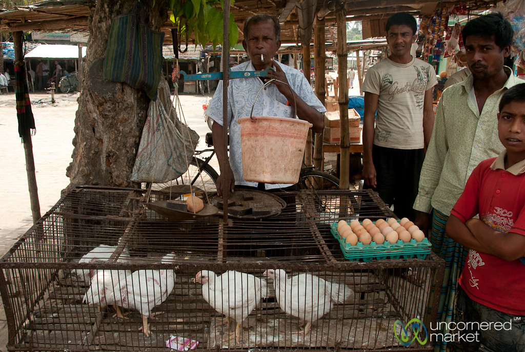 Chicken Vendor - Hatiandha, Bangladesh