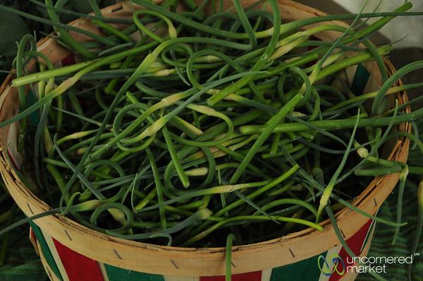 Twisted Garlic Greens - Ithaca Farmer's Market, New York