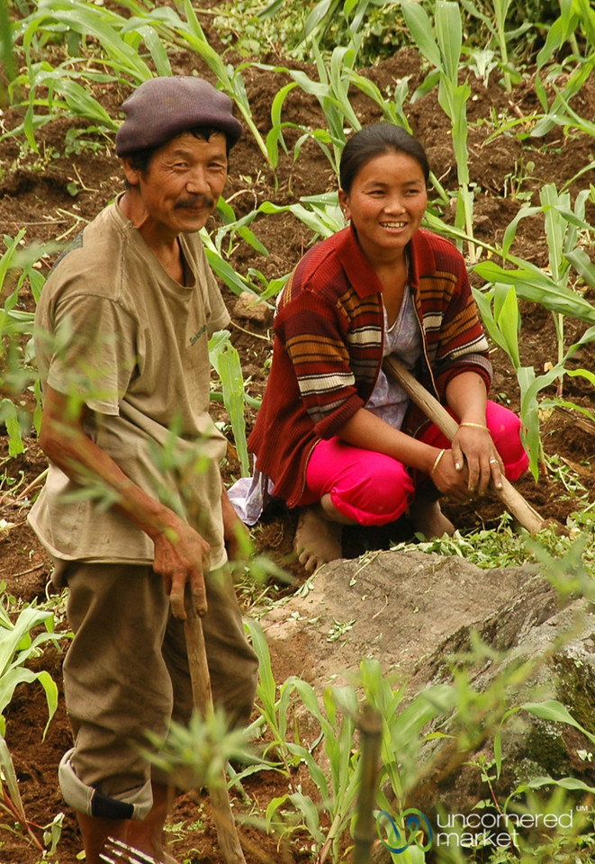 Tending the Fields - Yuksom, Sikkim