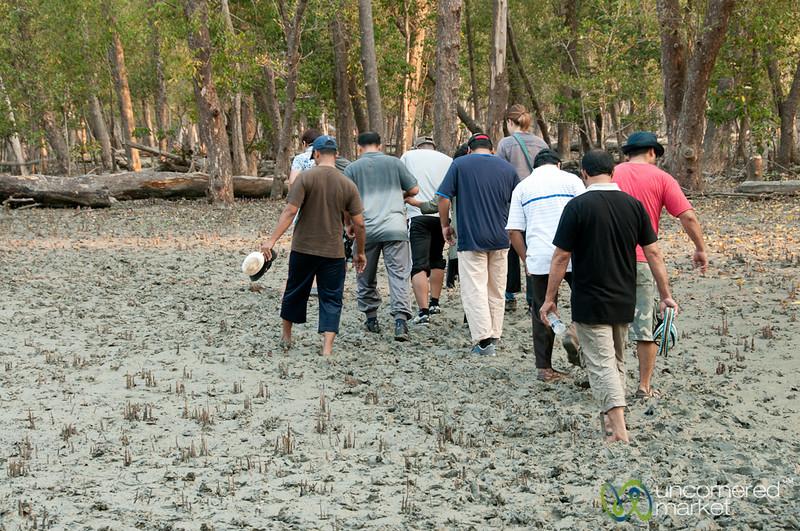 Mangrove Walk Through Mud - Sundarbans, Bangladesh