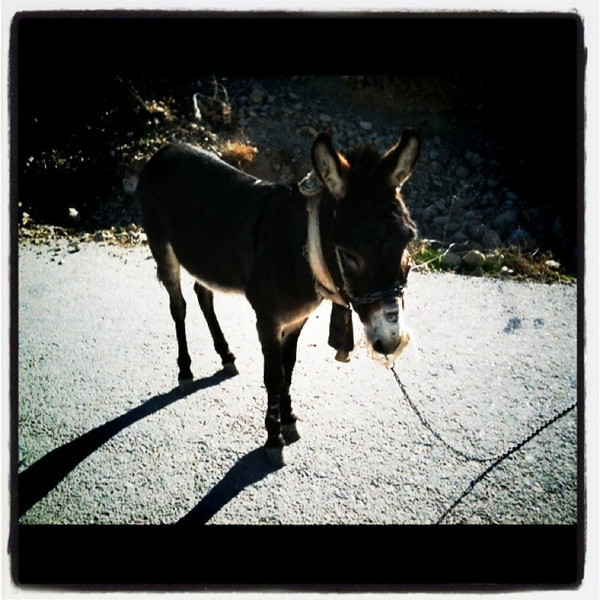 Yes, there are donkeys in Jordan