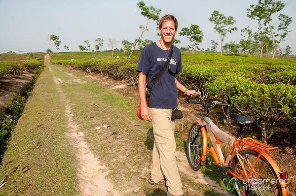 Riding Bikes Through Tea Estates Outside Srimongal, Bangladesh