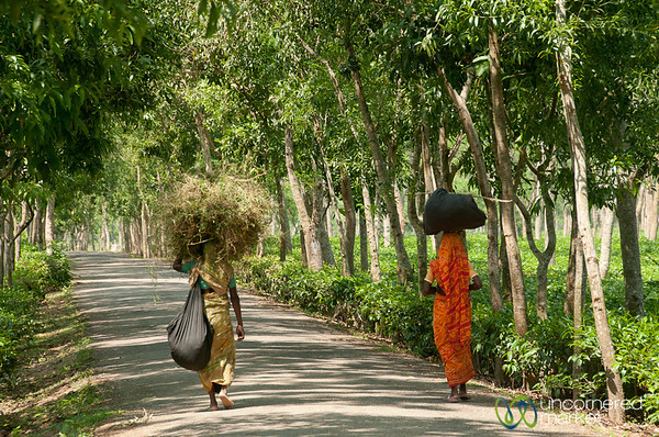 Women With Bundles on Head - Madhabpur Lake, Bangladesh