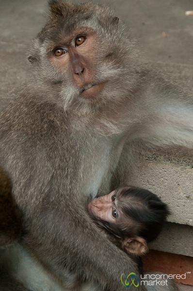 Breastfeeding Monkey - Ubud, Bali