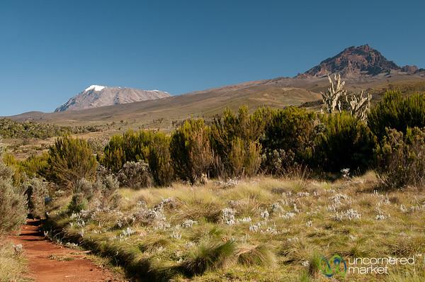 Mt. Kilimanjaro and Mawenzi Peaks - Tanzania