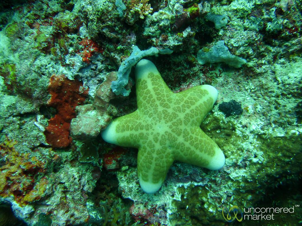 Huge Starfish - Menjangan Island, Indonesia
