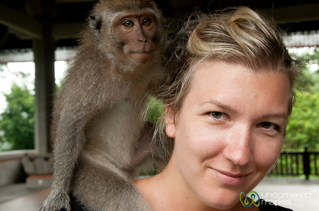 Friendly Monkey - Ubud, Bali