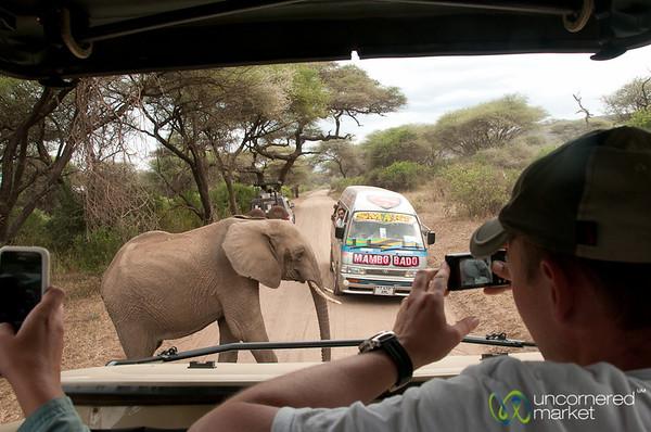 Elephant Crossing - Lake Manyara, Tanzania