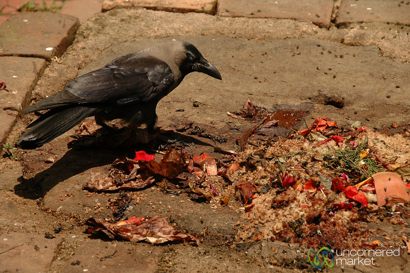 Crow Picks Through Offerings - Bhaktapur, Nepal