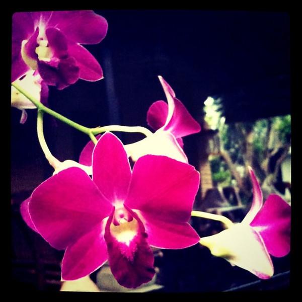 Orchid Loveliness - Ubud, Bali